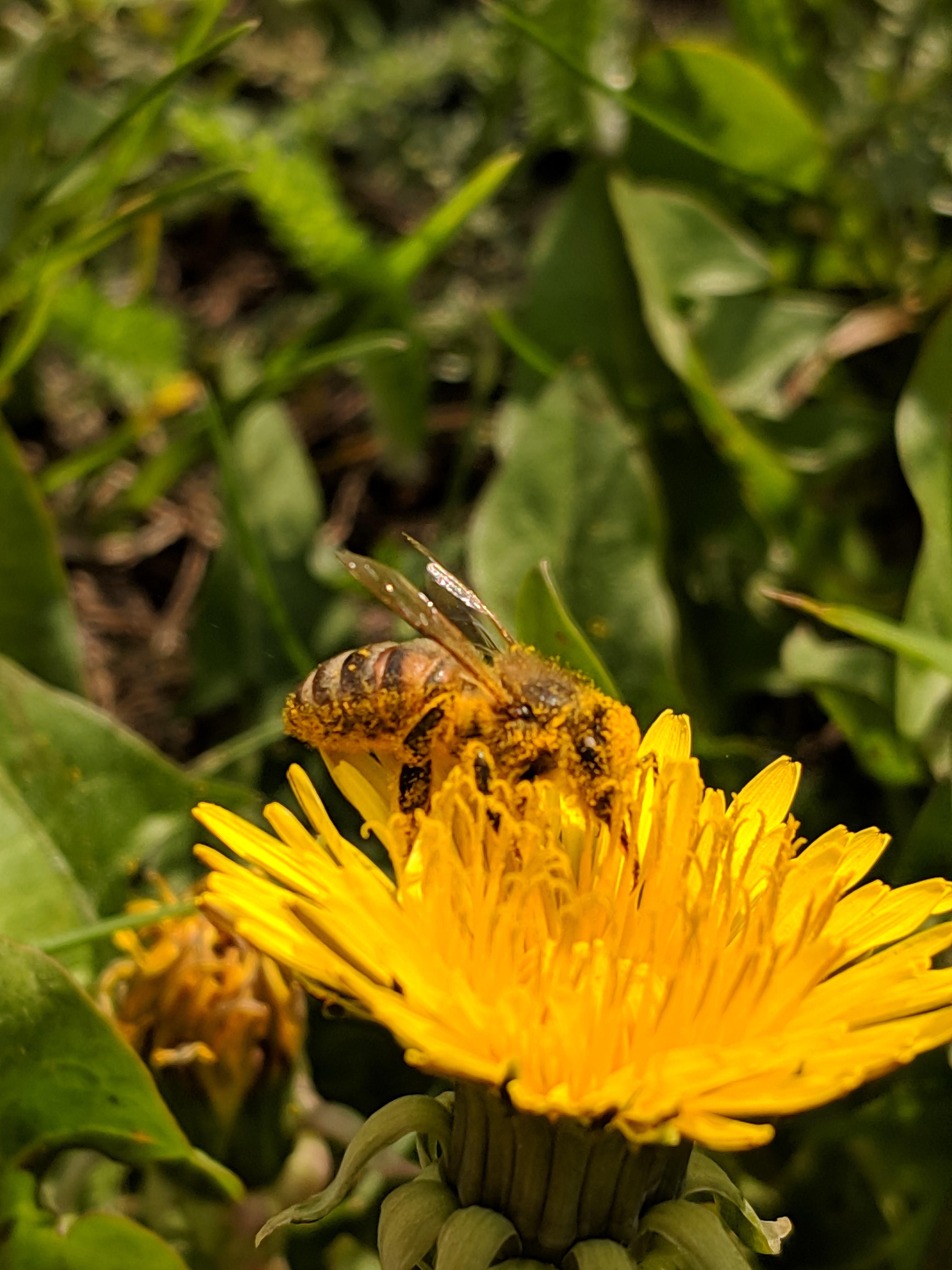 «Пчела за работой»